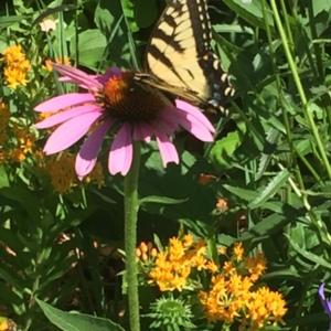 My pollinator garden