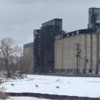 Buffalo River (Concrete Central grain elevator in the background)